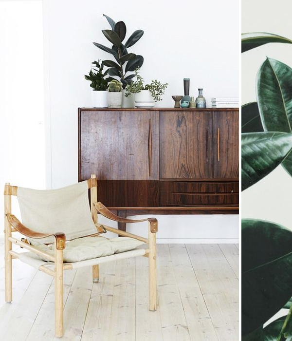 ebb & flow :: house plants