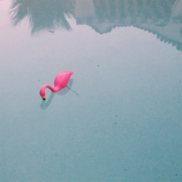 ebb + flow :: friday flamingo